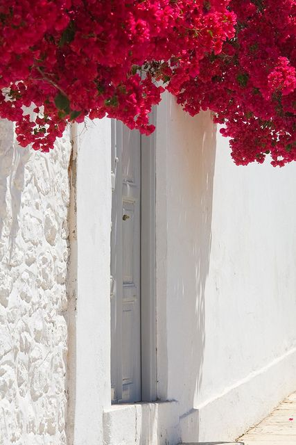 The immaculate white and blooming bougainvilleas of the Greek Islands