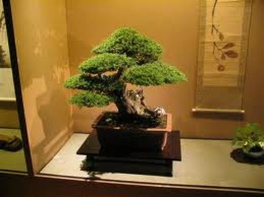 Bonsai Trees For Beginners-Grow Your First Bonsai Tree