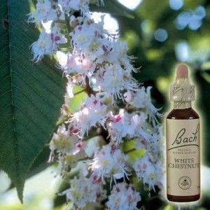 White Chestnut/Marronnier blanc n°35