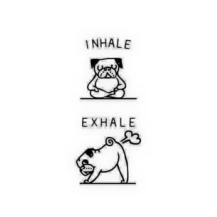 Pug Yoga                                                       …