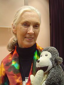 Jane Goodall, champion of the chimps. Book list, videos, downloadable documents, activities.