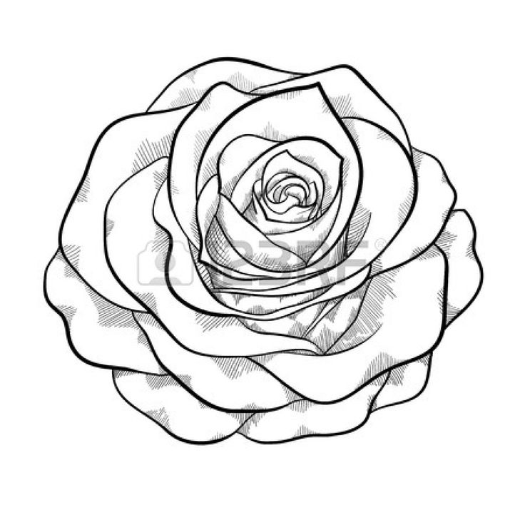 beautiful monochrome black and white rose isolated on white background. Hand-drawn contour lines and strokes. Vector