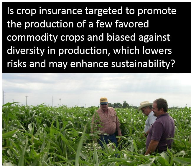 Is crop insurance targeted to promote the production of a few favored commodity crops and biased against diversity in production, which lowers risks and may enhance sustainability?