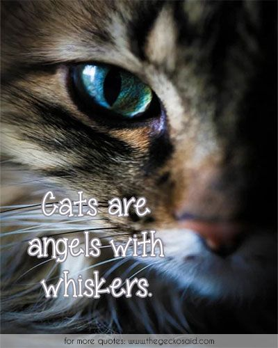 Cats are angels with whiskers. #angels #animals #cats #kittens #quotes #whiskers