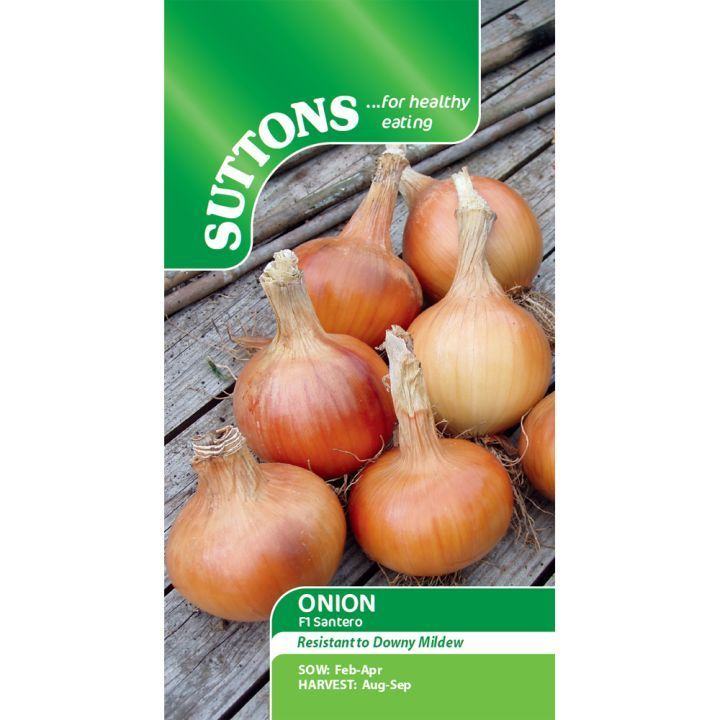 Onion F1 Santero Seeds - Suttons Seeds and Plants