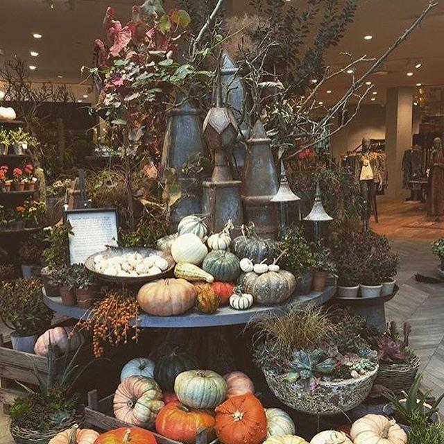 Just a few of the last fall pumpkins showing off at #TerrainWalnutCreek.