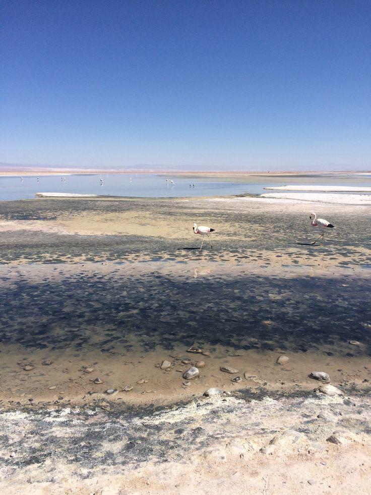 Chille Atacama
