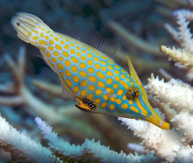 17 Best images about Aquariums & Marine Life on Pinterest ...