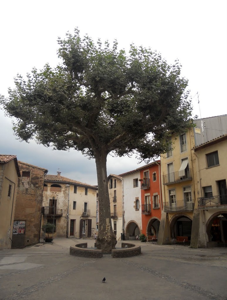 Arbúcies, a village in the province of Girona and autonomous community of Catalonia