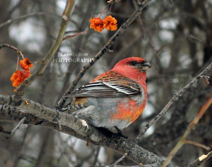 How to identify bird http://lunnika-horo.deviantart.com/journal/The-APN-Guide-How-to-Identify-Birds-614048319 #bird #animal #photography #biology #tutorial