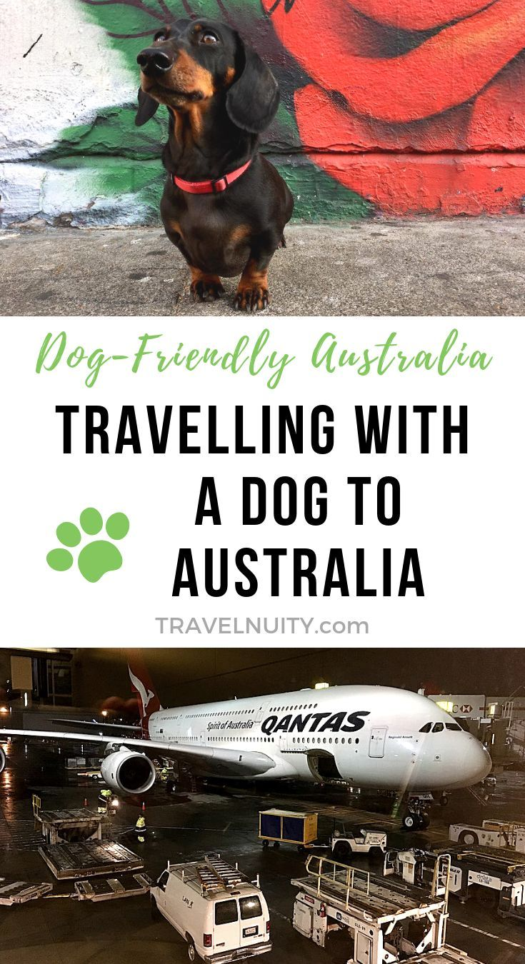 Bringing A Dog To Australia My Experience Australia Dog Friends New Zealand Itinerary
