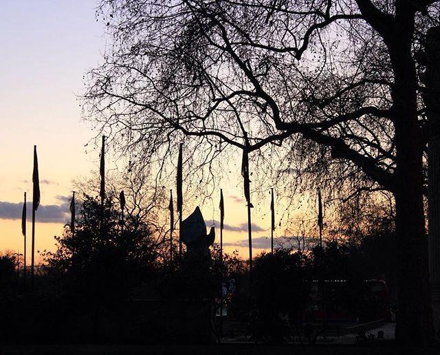 #photography #london #uk #sunset #tree #shadow #street #travel