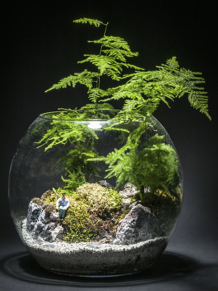 1779 best terrarium images on pinterest gardening miniature fairy gardens and terrarium ideas. Black Bedroom Furniture Sets. Home Design Ideas