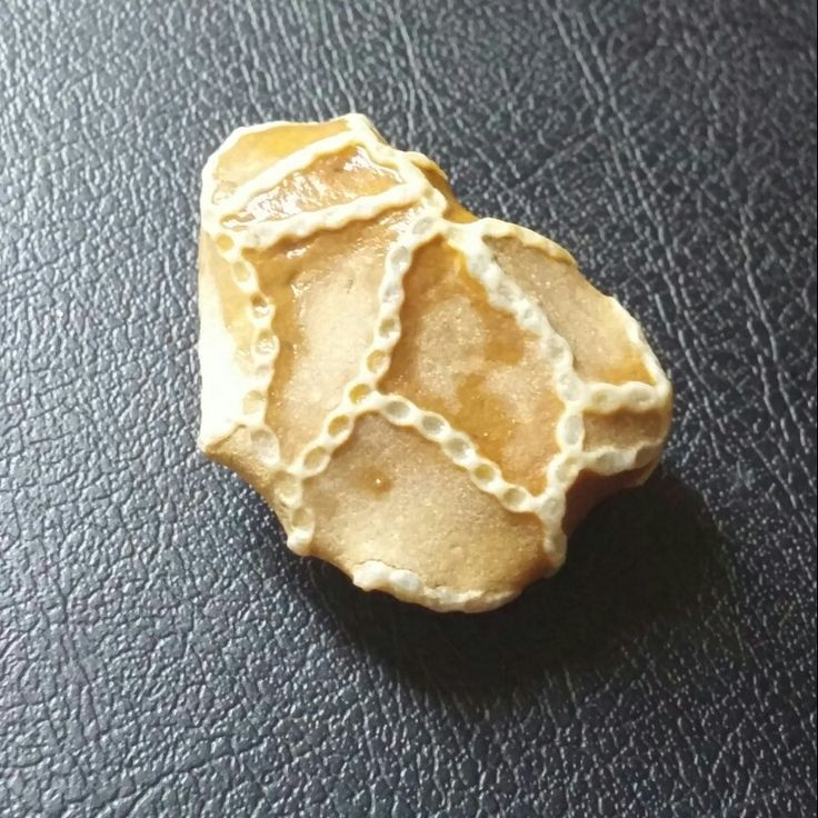 My chain coral fossil (Halysite Coral). I found it in Petoskey, Michigan