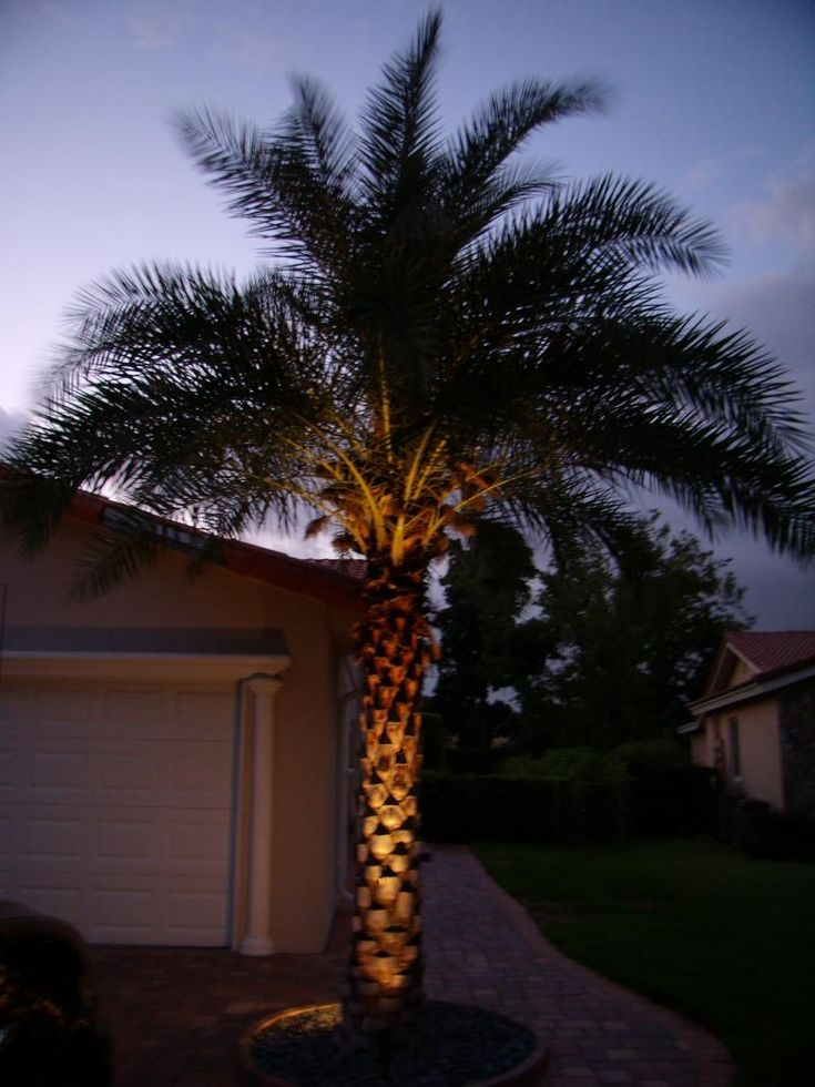 palm tree lighting - Google Search | Palm Tree Lighting ...
