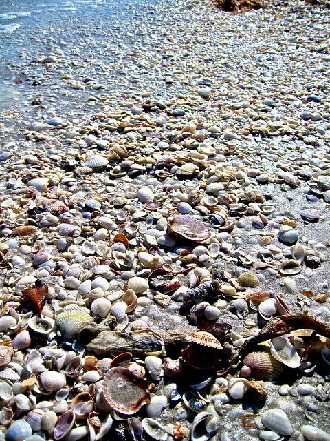 collect sea shells by the sea shore. Mason jar craft.
