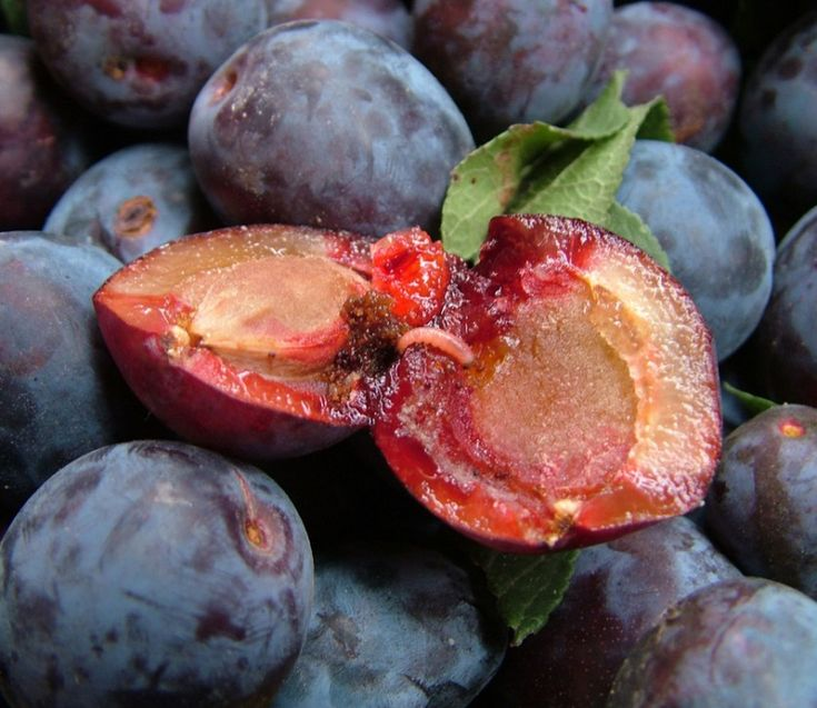 как бороться с плодожеркой