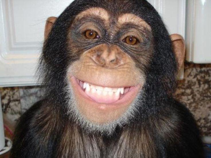 Chimp smile Shake Me Like a Monkey Pinterest Monkey