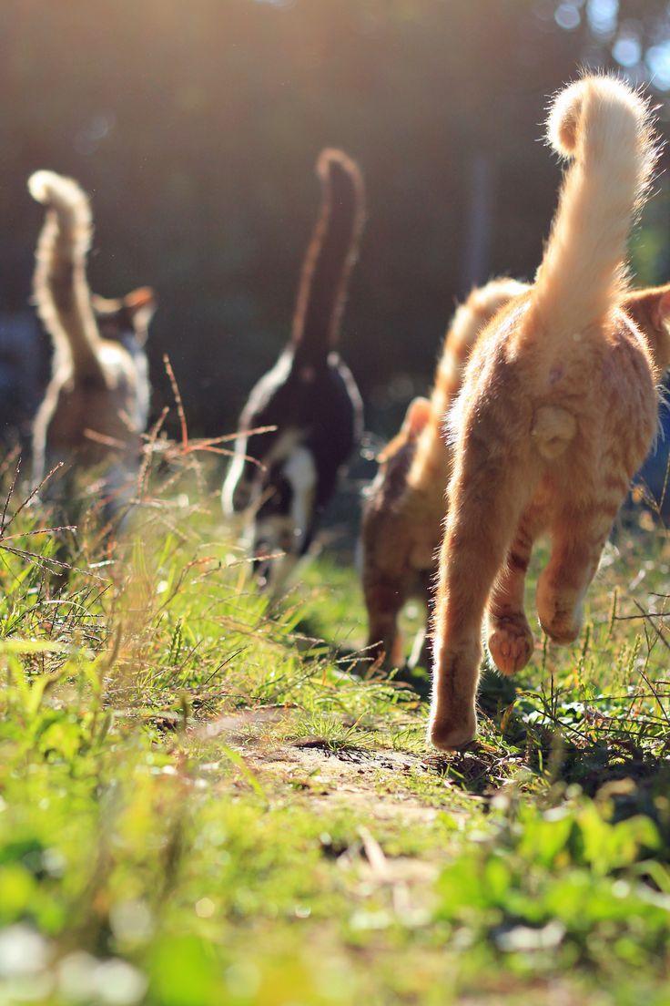 猫まっしぐらの画像(写真)