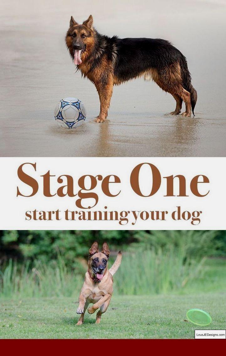 Hunting Dog Training Huntingdogtraining Dog Training Training