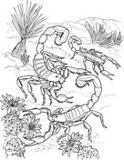 Escorpiones del Desierto Dibujo para colorear