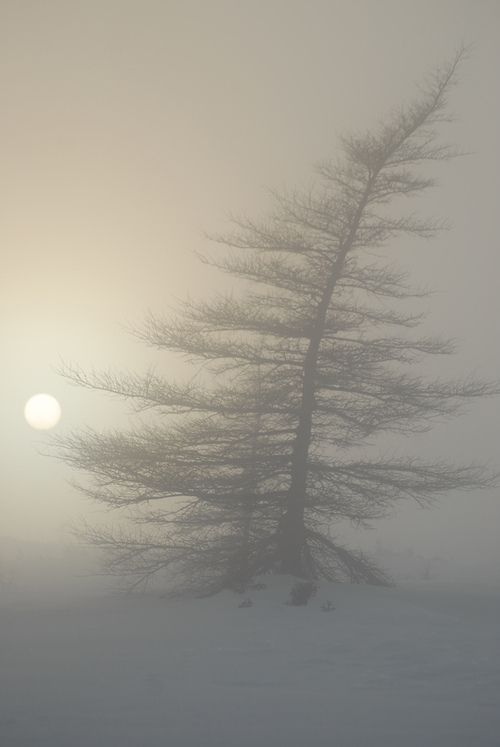 Softness of snow and fog - Gros Morne National Park, Newfoundland - Canada.