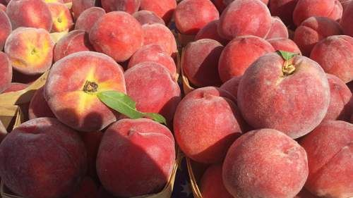Peach Allergy Symptoms and Diagnosis  Swelling of lips, burning sensation on tongue, watery eyes and repeated sneezing are some adverse symptoms you'll experience after ingesting peach fruit, if you've peach allergy.  http://allergy-symptoms.org/peach-allergy/