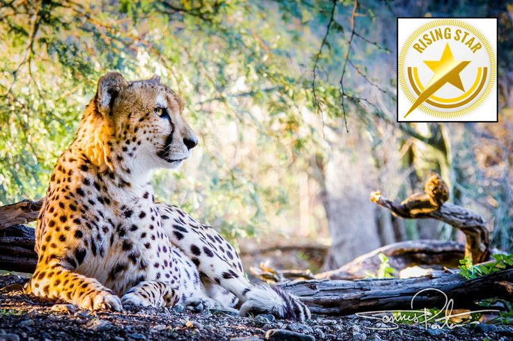 Who says Cheetahs never win? Three tips to help you win an online photography contest.