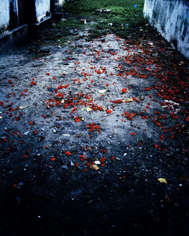 Flower road Tanzania by Kjetil Hasselgård