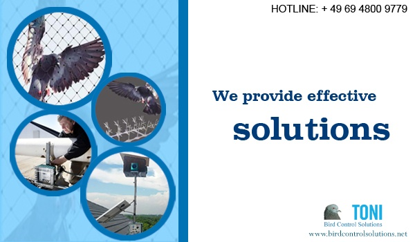 We  provides different bird control methods according to your needs. Our bird control services include, bird netting, bird spikes, wire,  electronic system & many more. http://www.birdcontrolsolutions.net/