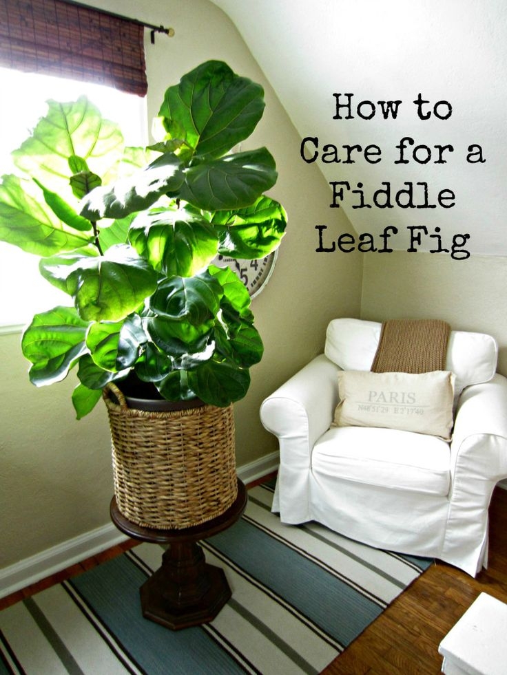 bird of paradise plant care instructions
