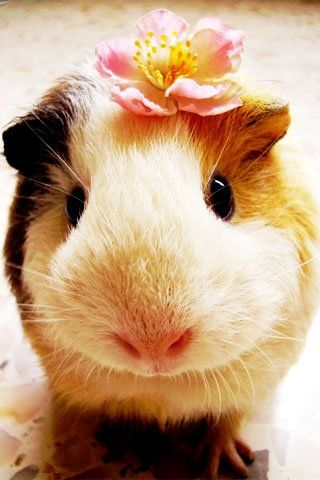 Piggy wears a flower
