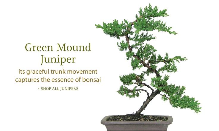 Brussel's Bonsai Nursery, Bonsai Trees and Accessories