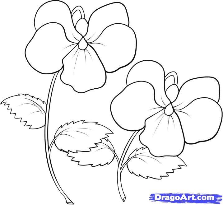 Violet Coloring Pages | how to draw violets step 6 | A ...