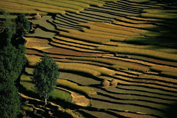 Pokhara rice fields, Nepal