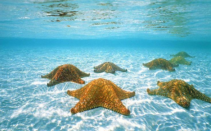 10 Snorkeling Spots in Roatan -  Starfish Alley - Honduras