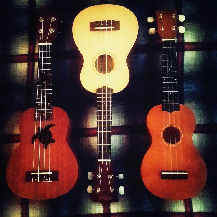 Apparently the first step is admitting you have a problem. #ukulele #music #turtle #mahalo #ukuleleaddiction #goodweatherforducks