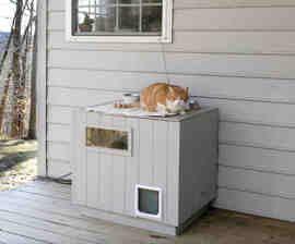 feral cat shelter my nosy kitties would like a window