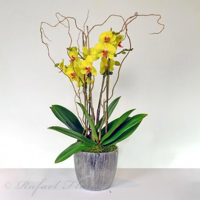 Orchids Asda Orchids Orchid Plants Orchids Plants