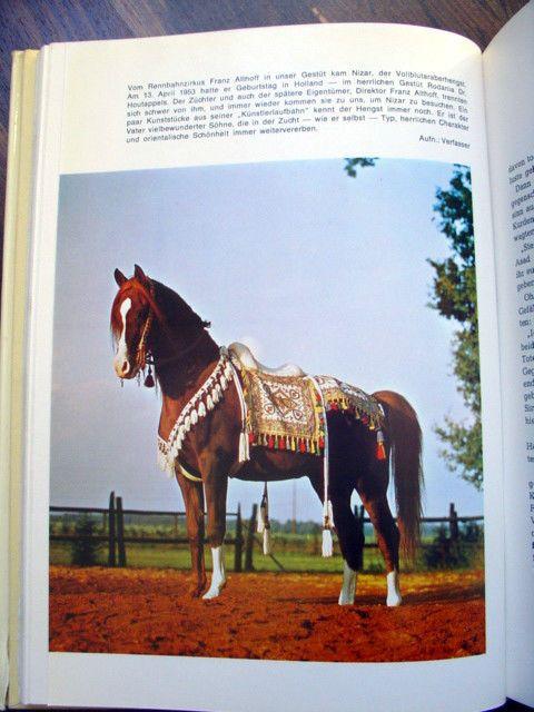 Dömken Pferdebuch * Araber Ghazal Nizar Afifa * Pferdezucht berühmte Pferde