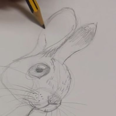 orejas de conejo 2