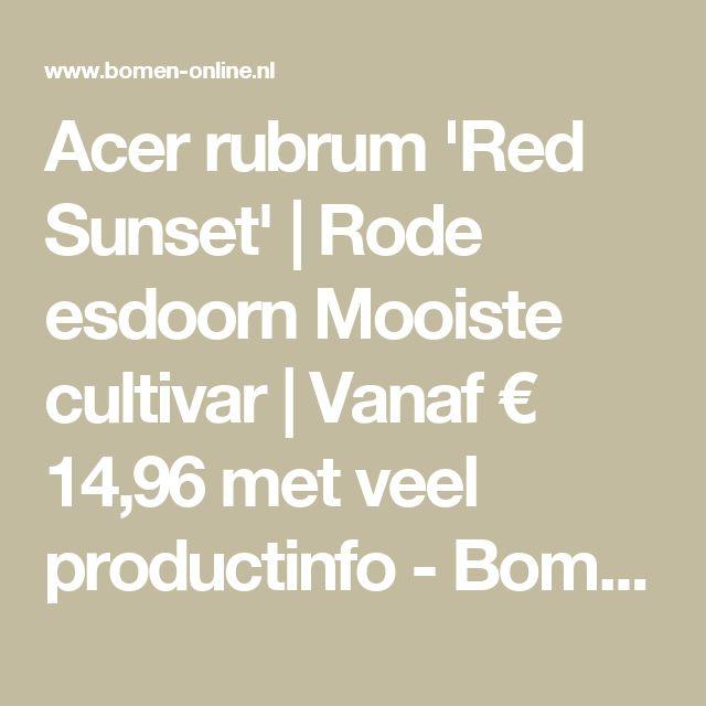 Acer rubrum 'Red Sunset' | Rode esdoorn     Mooiste cultivar | Vanaf € 14,96 met veel productinfo - Bomen Online
