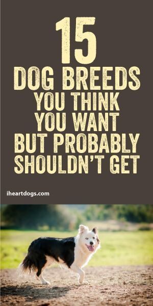 You might be surprised to see what breeds made this list...