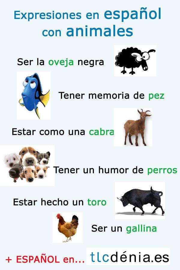 Expresiones en español con animales. Spanish expressions. www.en.tlcdenia.es/spanish-courses-in-spain/