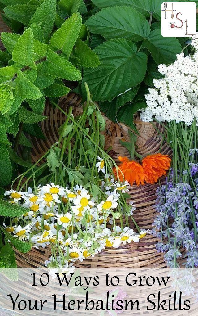 Best 25+ Herbalism ideas on Pinterest