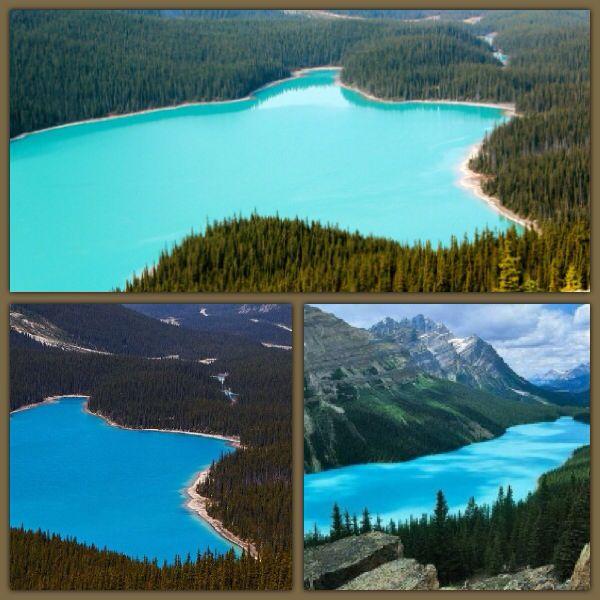 Der Peyto Lake wird einer unserer Zwischenstopps auf unserer Kanada Rundreise...ich freu mich wahnsinnig....blue nature....pure! Gefunden auf Pinterest!
