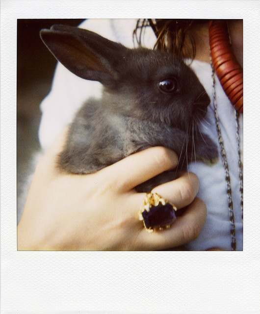 Am I officially the Bunny War winner yet @Wendy?: Photos, Bbi Bunnies, Bunnies Baby, Posts, Things Rabbit, Bunnies War, Baby Things, Animal Holidays, Ancient Animal