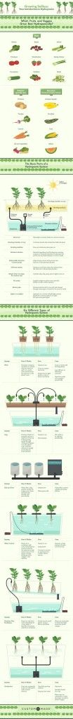 Growing Soilless: Your Introduction to Hydroponics #gardening