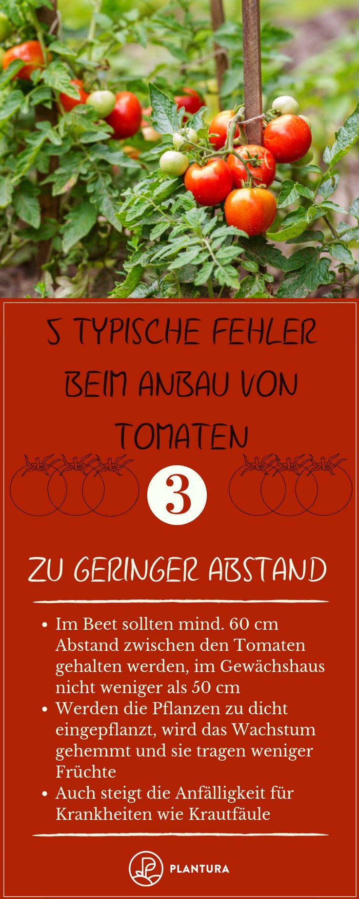 5 typische Fehler beim Anbau von Tomaten