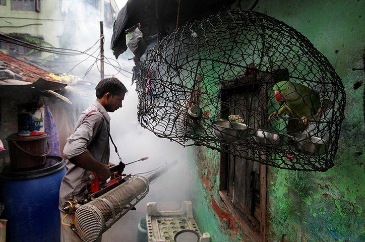 24 hours: Kolkata, India: A health official sprays pesticides